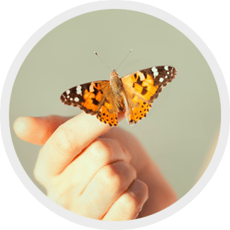 round image of a butterfly on a hand