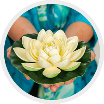hands holding a lotus blossom
